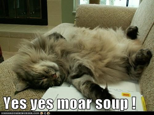 Image result for cat with soup meme
