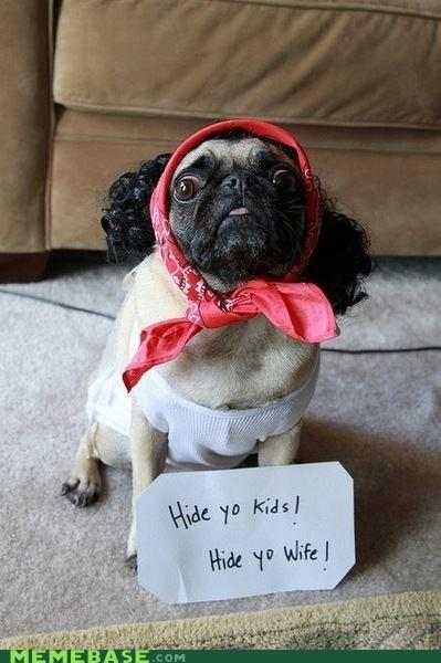 Antoine Dodson dogs hide yo kids Memes repost - 6106846720