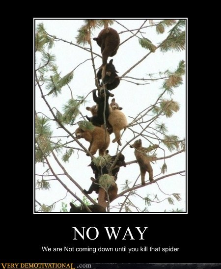 bears,hilarious,no way,spider,tree