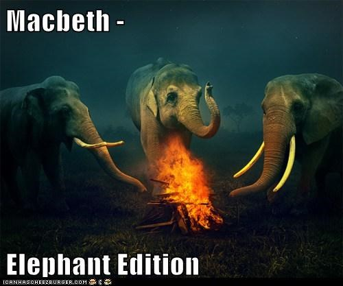 campfire,elephants,fire,macbeth,shakespeare,Witches