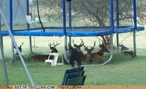 antlers deer IRL trampoline - 6107214336