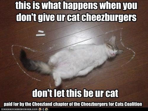 Cheezburger Image 6107529728