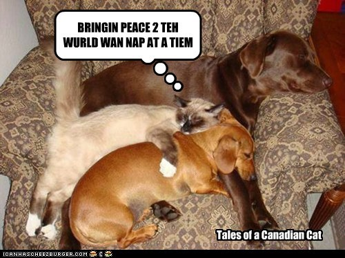 BRINGIN PEACE 2 TEH WURLD WAN NAP AT A TIEM Tales of a Canadian Cat