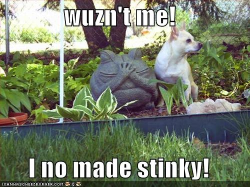 wuzn't me!  I no made stinky!