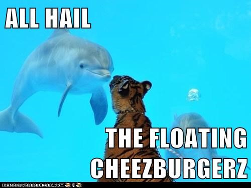 Cheezburger Image 6107853312