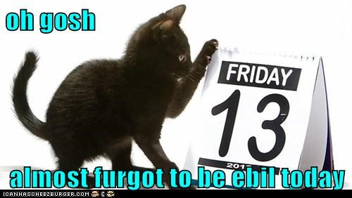 basement cat,calendar,cat,evil,forgot,friday the,lolcat,remember