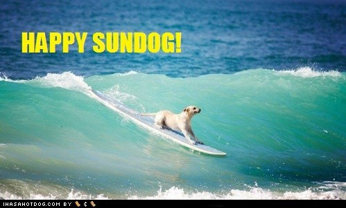 dogs Sundog surfing - 6108082688