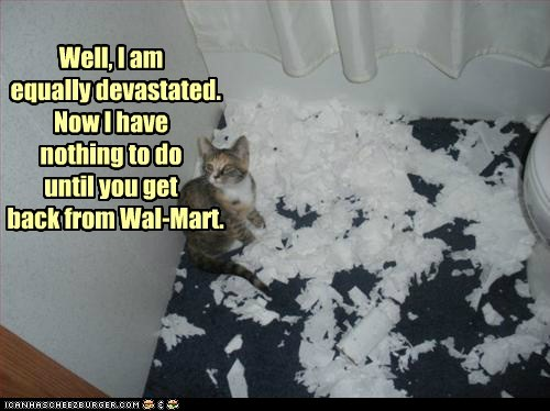 bored Cats destruction devastated mess messes messy paper toilet paper wal mart - 6108161280