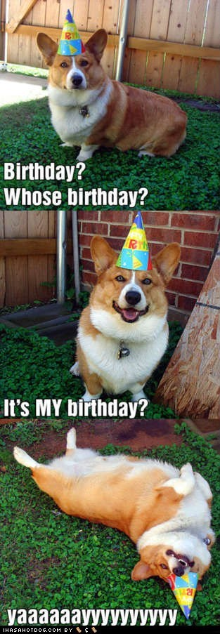 best of the week birthday birthday hat birthdays corgi corgis dogs Hall of Fame happy hats multipanel yay