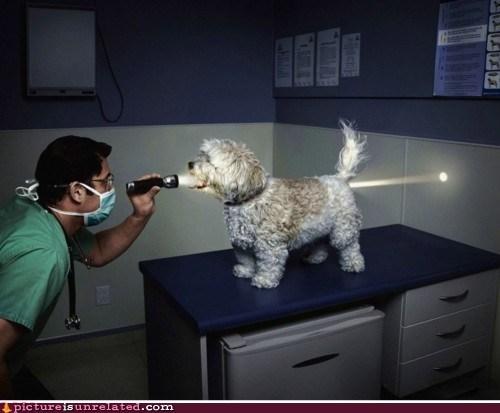 best of week dogs flashlight OPEN WIDE vet wtf - 6108393216