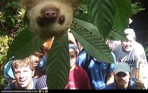 photobomb,photobombing,sloth,sloths