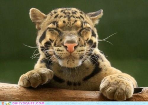 face happy leopard smile - 6108585472