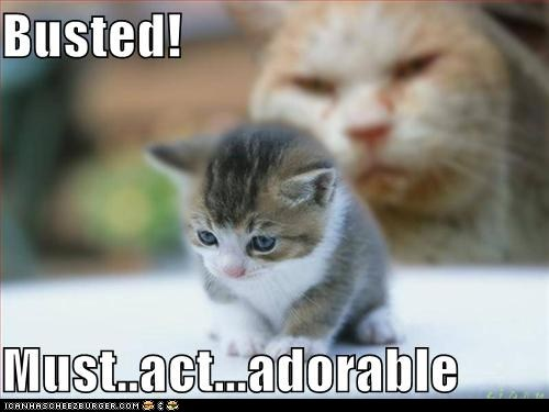 adorable bad busted classic classics dad innocent lolcat mom shame trouble - 6108599552