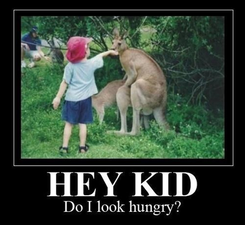 demotivational posters,feed the animals,having the secks,kangaroo