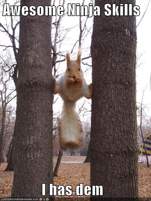 ninjas outdoors skills squirrels trees - 610876160