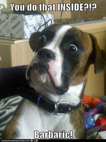 Baffled Boxer bathroom boxer dogs inside Memes poop shock - 6109084672