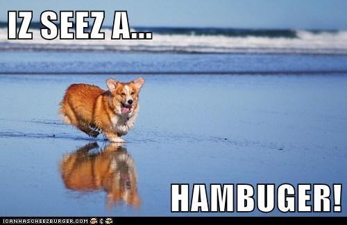 Cheezburger Image 6109256192