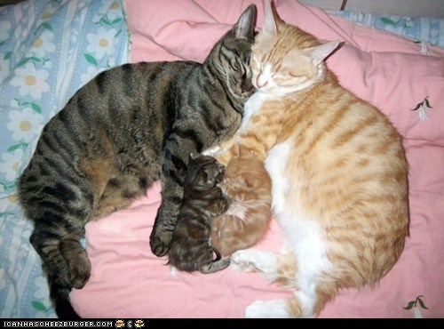 Cats,cyoot kitteh of teh day,family,happy family,kitten,newborns,sleeping
