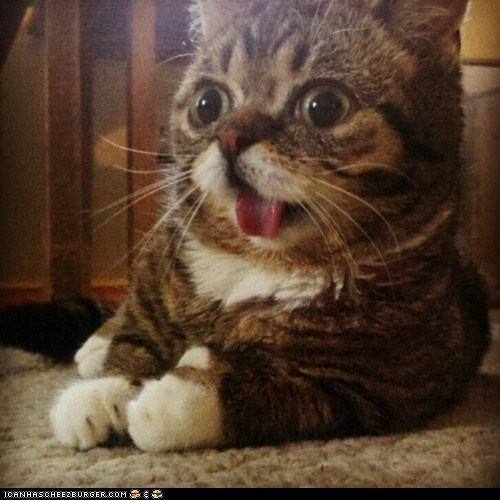 Cats cyoot kitteh of teh day derp expressions face herp lol tongue out tongues wide eyed