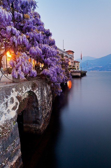 Hall of Fame,Italy,lake,Wisteria