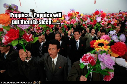 North Korea political pictures poppies - 6109982976