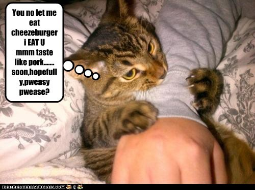 Cheezburger Image 6110755328