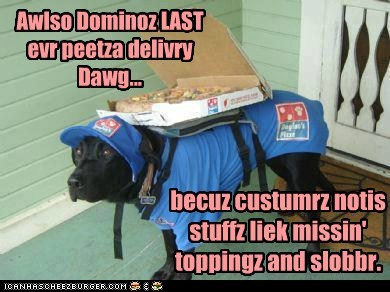 Black Lab delivery dog dogs pizza