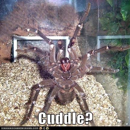 cuddle cuddles cute Fluffy gah hairy offer scary spider spiders tarantula tarantulas - 6111416576