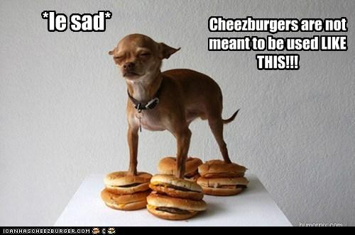 Cheezburger Image 6112094720