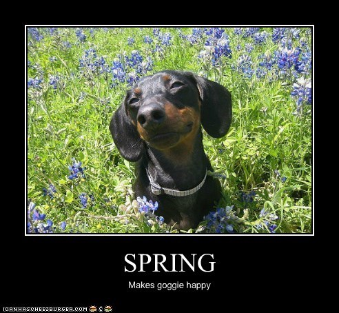 SPRING Makes goggie happy