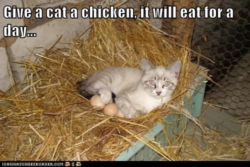 Cats,chicken,chickens,eggs,give a man a fish,sayings,teach,teaching