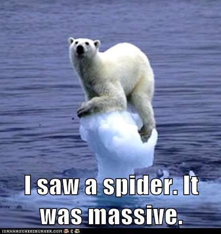 eek ice melting polar bear polar bears scared spider - 6112515328