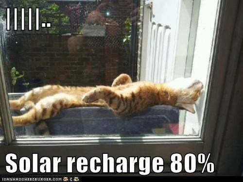 cat energy Hall of Fame lolcat recharge relax sun - 6112858368