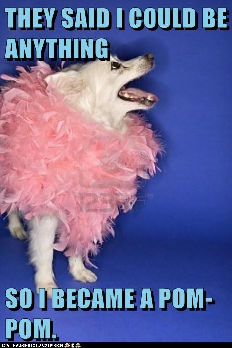 dogs pink pom pom what breed - 6113521408