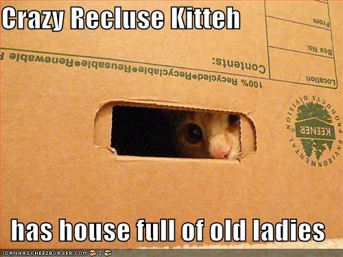 box,crazy,lolcats