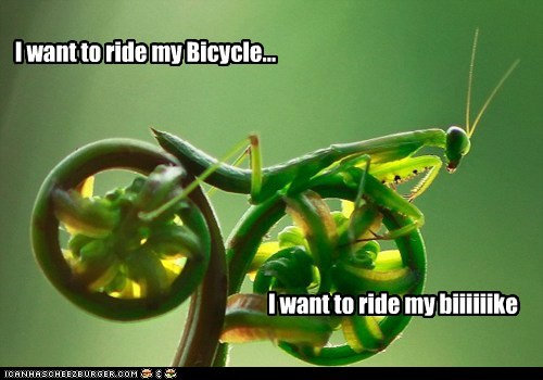 best of the week bicycle bikes Hall of Fame lyrics plant praying mantis queen ride Songs want want bicycle