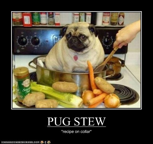 PUG STEW *recipe on collar*