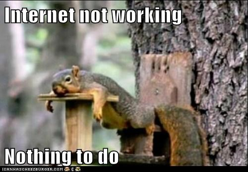 bored internet not working nothing to do Sad squirrel squirrels table - 6115111936