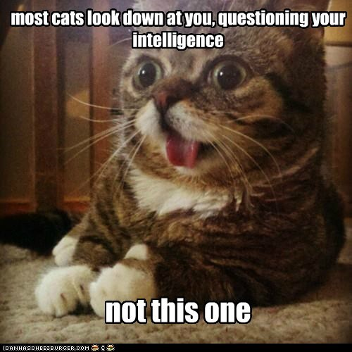 best of the week Cats condescending derp derping dumb Hall of Fame intelligence most smart stupid - 6115345152