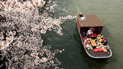 boat cherry blossom Japan Sakura - 6115569664