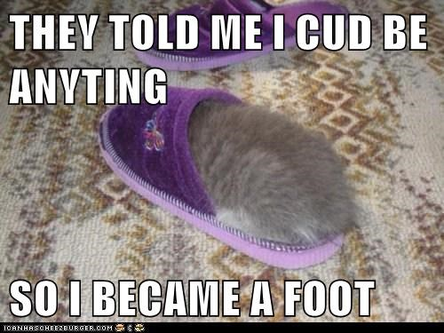 Cats feet foot Memes slippers they told me i could be anything - 6116418816