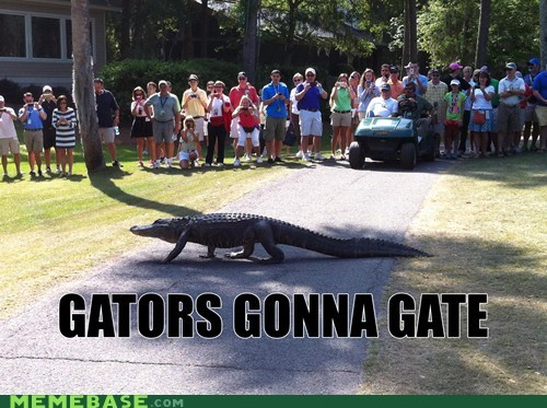 alligator gator haters gonna hate puns - 6116430336