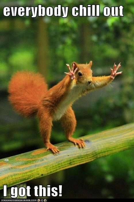 best of the week calm chill out everybody Hall of Fame i got this squirrel squirrels stop whoa