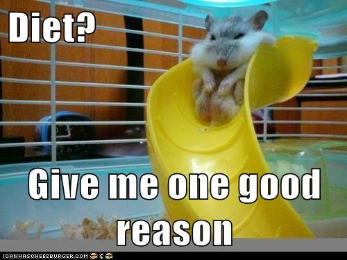 denial,diet,fat,hamster,reason,slide,stuck