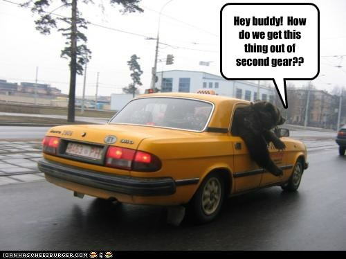 bear,buddy,driving,faster,gear,slow,taxi