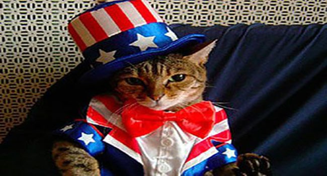 cat wearing us flag colors for 4th of July