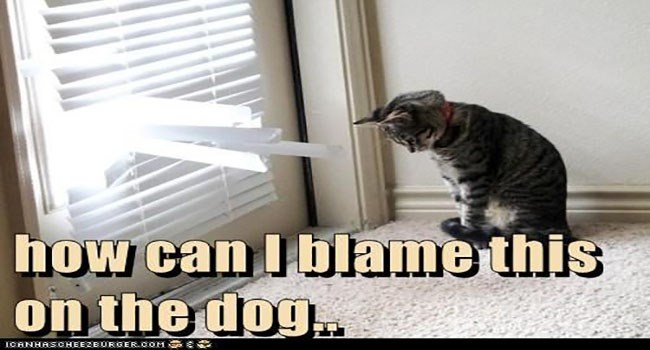 memes of cats trying to blame the dog for whatever it is that they did