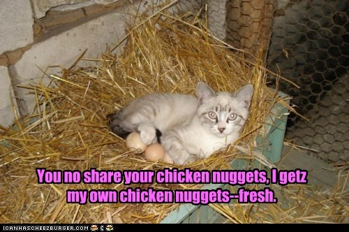 Cheezburger Image 6119508224