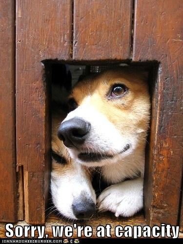 corgi dogs door sorry - 6120226560