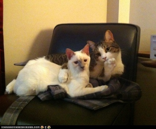 aww yeah Cats dating smooth suavé two cats - 6120389376